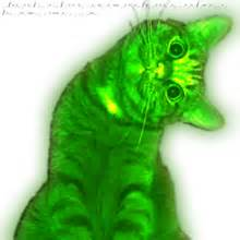 glowing cat