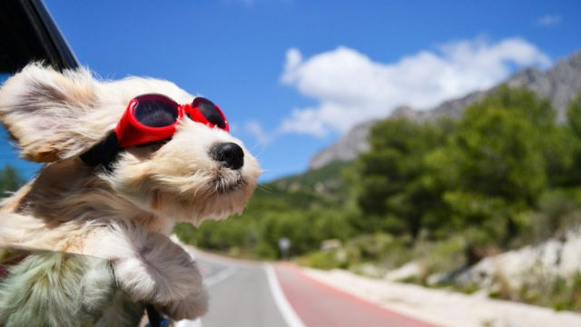Ultra-4K-Dog-Face-Wind-Glasses-Animal-1136x640
