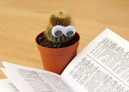 reading cactus